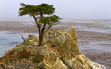 Lone Cypress by jeenie11, photography->nature gallery