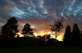Lions Park Silhouettes by Nikoneer, photography->sunset/rise gallery