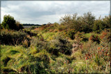 Zeeland Countryside (37), Just Natural by corngrowth, photography->landscape gallery