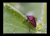 Red & Water by kodo34, Photography->Insects/Spiders gallery