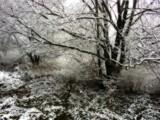 Slice of Winter by jojomercury, Photography->Landscape gallery