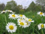 Daisies by Chutters42, photography->manipulation gallery