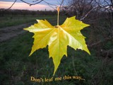 don't leaf by BernieSpeed, photography->manipulation gallery