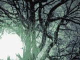 Tree Spill by Eventualyeti, abstract gallery