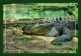 Alan by Jimbobedsel, Photography->Reptiles/amphibians gallery