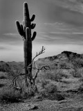 Life and Death in the Desert by snapshooter87, photography->landscape gallery