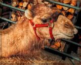 Meet Joe by trixxie17, photography->animals gallery