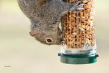 Acrobatics At The Feeder by tigger3, photography->animals gallery