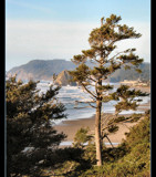 View of Haystack Rock from the South by verenabloo, Photography->Shorelines gallery