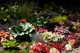 Stotts Garden 2014 (plantings) by tigger3, photography->gardens gallery