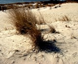 Beach Grass by ohpampered1, Photography->Shorelines gallery