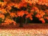 Orange Sanctuary by jojomercury, Photography->Nature gallery
