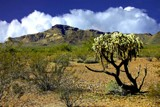 One Lonely Cholla by snapshooter87, photography->landscape gallery
