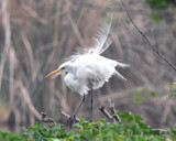 A Softer Moment by garrettparkinson, photography->birds gallery