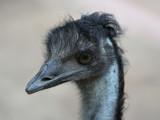 Mr. Blue by Paul_Gerritsen, Photography->Birds gallery