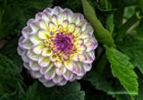 Digi Gone Foofy by DigiCamMan, photography->flowers gallery