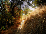 Grass, Trees and Sun by illuminatiscott, Photography->Landscape gallery