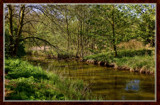 Brook In Wood by corngrowth, Photography->Landscape gallery