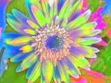 Tie Dye Daisy by lilkittees, Photography->Manipulation gallery