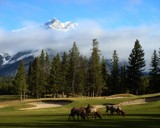Elk on the 9th hole (Banff) by Quiet, Photography->Mountains gallery