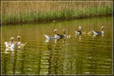 Family Outing by corngrowth, photography->birds gallery
