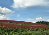 Series 7. Oregons Red Fields Forever! by verenabloo, Photography->Landscape gallery