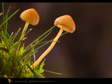 canted by kodo34, Photography->Mushrooms gallery