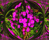 Flower Art 2 by gizmo1, photography->manipulation gallery
