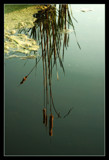 upside down? by JQ, Photography->Water gallery