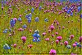 Wild Flower Bonanza by quickshot, photography->flowers gallery