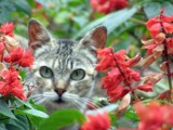 Kitty in the Garden by jdinvictoria, Photography->Animals gallery