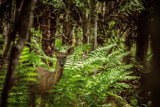 Deer in Hiding by Eubeen, photography->animals gallery