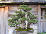 Japanese Bonsai by kimcande, Photography->Architecture gallery