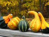 Gourds by zippee, Photography->Still life gallery