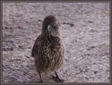 Cheeky Bird. by SusanVenter, Photography->Birds gallery