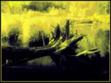 La souche by noranda, Photography->Manipulation gallery
