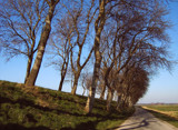 Zeeland Countryside (02), Abandoned Road by corngrowth, Photography->Landscape gallery