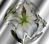 Silver Star Lily for My Mom by verenabloo, Photography->Manipulation gallery