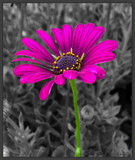 Color Among the Weeds by ccmerino, photography->manipulation gallery