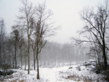Snow hit by thebitchyboss, Photography->Landscape gallery