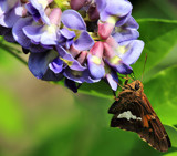 Flutterby Perspective by tigger3, photography->butterflies gallery