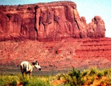 A Navajo Pony in Monument Valley by snapshooter87, photography->animals gallery