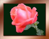 Image: Queen of Flowers #2