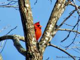 Hide and go Seek? by brandondockery, photography->birds gallery