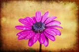 Purple by twinkel, photography->flowers gallery