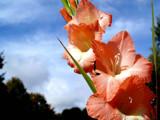 Seeking the Sun! by marilynjane, Photography->Flowers gallery