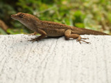 Cool Lizard by jmar, Photography->Animals gallery