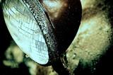 Alien Strobe by Fifthbeatle, photography->manipulation gallery