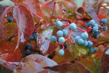 Wet berries by elektronist, photography->nature gallery