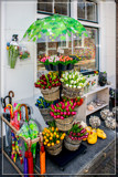Dutch Tulips For A C... by corngrowth
